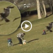 Video Of Eagle Snatching Toddler From Park