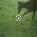 Deer Eats Bird and Gets Attacked by Family