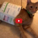 Curious cat gets the cardboard box, scares us all!