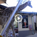 Giraffe Helps Himself To Dinner At A Local Restaurant