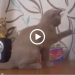 Cat Reacting To Dubstep