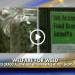 ObamaWeed: Colorado Allows Welfare EBT Cards To Buy Marijuana