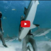 Man Puts Shark In Trance Balancing Him In The Palm Of His Hand