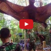 Giant Bat With 6 Ft Wing Span Captured In The Jungles Of The Philippines