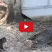 Cat Saves Boy From Two Vicious Gators – Cat vs. Gators