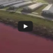 [VIDEO] A Drone Surveilled A Pig Farm To Discover It's Something Much More Disturbing