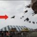Graphic– Woman Flies Off Amusement Park Swing
