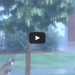 A Neglectful Owner Tied His Dog To A Tree During A Storm, Wait Til You See What Happened