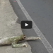A Sloth Crossing The Road Might Be The Most Amazing Thing You See All Day!