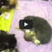 A Mama Cat Was Given A Baby Squirrel – Can You Guess What Happened?