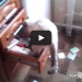 How These Cats Take Revenge Will Shock You – Maybe Even Make You Laugh!