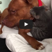 You Won't Believe Your Eyes As You Watch This Pit Bull And Kitten Play Fight!