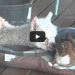 An Alpaca Lays Down With Cats, Then Cuteness Explodes!