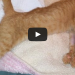 Oscar The Brain Damaged Cat Gets A Second Chance At Life!