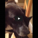 This Dog Was Gone For Over A Week – The Cat's Reaction….. PRICELESS!