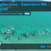 You Won't Believe What This Drone Caught These Dolphins Doing On Camera!