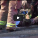 OMG! This Dog Was On The Brink Of Death, Until This Firefighter Stepped In