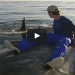 OMG! This Man Sits On A Floating Whale Carcass While Sharks Feed On It!