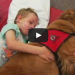 They Introduced Their Lifeless Son To A Therapy Dog, What Happens Next Will Leave You In Tears!