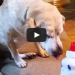 This Dog's Reaction To Her Ear Medicine Is So Funny I Had To Watch It Twice! LOL!