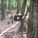 """Lizard Man"" Is Back In South Carolina – WATCH, Do You Believe?"