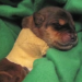 This Puppy Wasn't Expected To Live, But See How He Defied All Of The Odds!