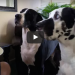 Dad Refuses To Share His Sandwich – Now Watch The Big Dog In The Back!