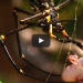 Frog Gets Caught In A Deadly Spider Web, What Happened Next Was Completely Unexpected!