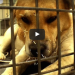 He Came In With Quills All Over His Face, But Wait Until You See What Happens In The End!