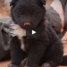 They Rescued An Abandoned Puppy, But Where They Found Him Was Heartbreaking