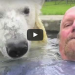 When This Giant Polar Bear Sees This Man, She Does Something That Will Blow Your Mind!