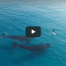 Drone Captures Amazing Footage Of A Paddle Boarder's Interaction With 2 Whales