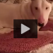 She Lived In A Cage For 7 Years, So When She Saw A Bed For The First Time…. LOL!