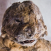 12,000 Year Old Lion Cubs Discovered Perfectly Preserved Below Ice