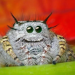 Spiders Who Are Done Being Creepy And Just Want To Be Loved