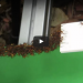 This Living Bridge Built By Army Ants Just Might Make Your Skin Crawl!