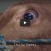This Cow Was Rescued From Slaughter, In Her Gratitude She Began To Cry