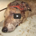 This Injured Dog Went To The Basement To Die, But Then The Unthinkable Happened