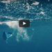 This Flying Fish Escapes His Predators, And It Might Be The Craziest Thing You See All Day