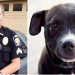Police Chief Resigns After Caging A Family's Puppy And Killing It At Shooting Range