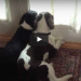She Set Up A Camera To Watch Her Dogs At Home, 10 Seconds Later…. WOW!