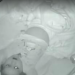 Mom Puts Toddler In Crib, Hours Later She Catches THIS On The Baby Monitor!