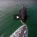 THIS Is The Last Thing You Want To Come Across In The Ocean While Paddle Boarding!