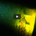 What This Diver Found At The Bottom Of The Ocean Will Freak You Out!
