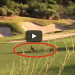 When A Mountain Lion Walked Onto A Golf Course, They Weren't Expecting THIS To Happen!