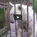 This Elderly Bear Was Abused For Decades, But You've Got To See Her Now!