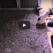These Cats Were Lying On The Floor When All Of A Sudden They Stood Up And Did THIS!