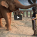 She Approached This Elephant And Started Singing, What Happened Next Left Me In Tears