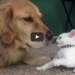 Kitten wants to play, dog wants to nap!