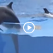 Dolphin Jumps Out Of Tank During Show